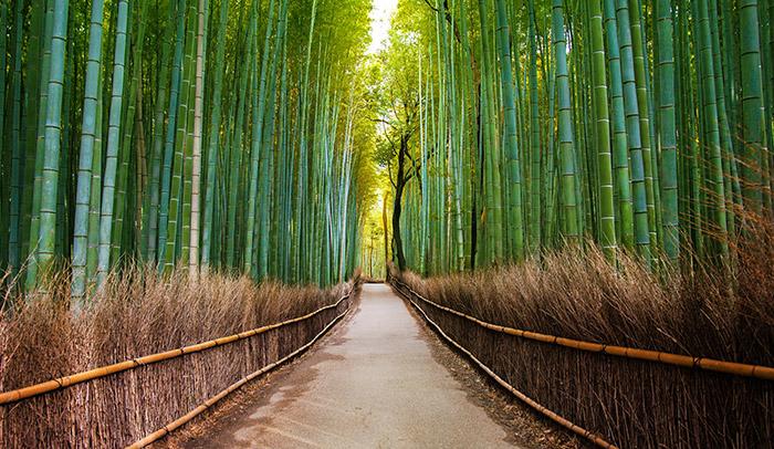 Bamboo Forest Arashiyama Kyoto