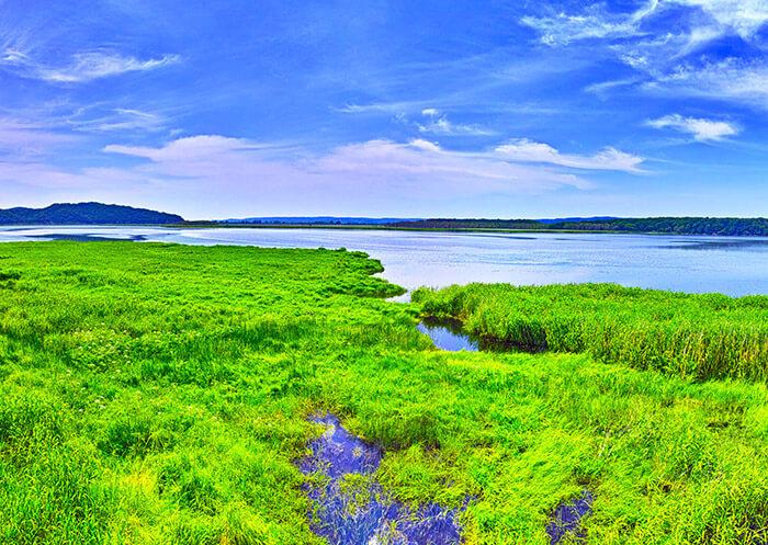 Kushiro wetlands