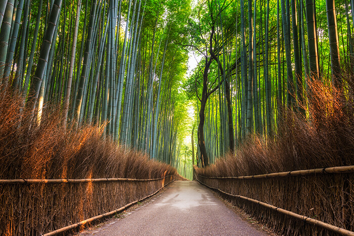 Arashiyama Bamboo Grove of Kyoto, Japan