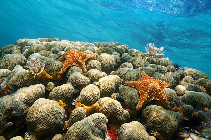 Aruba Bob Snorkeling