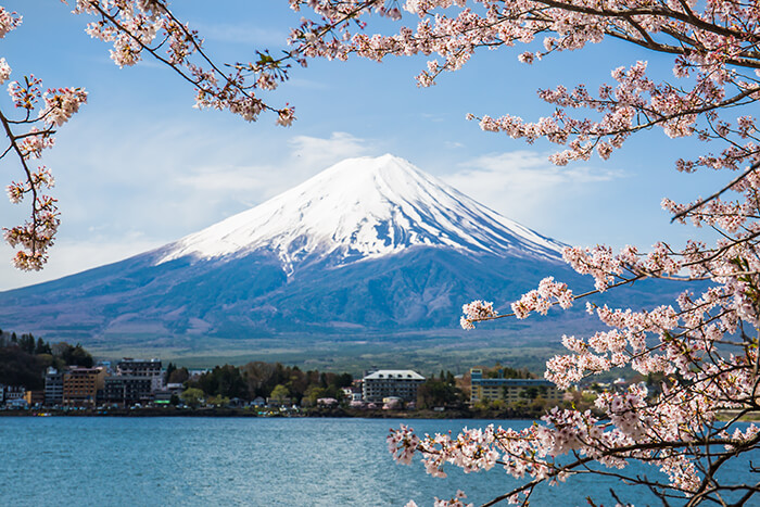 Mount Fuji with cherry blossom