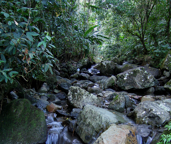 Rio Abajo Forest Reserve