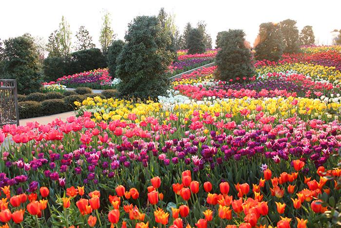 Tulsa Botanic Garden