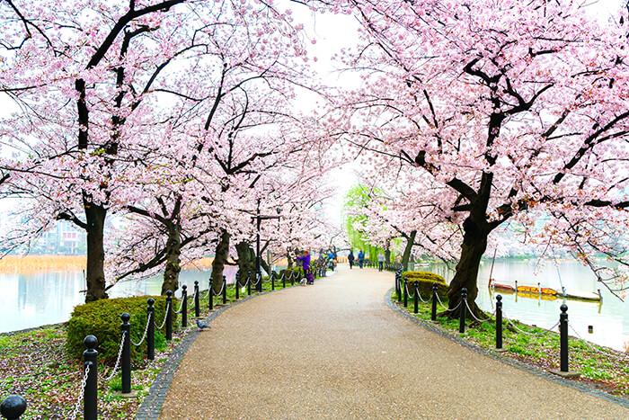 Ueno Park at Tokyo