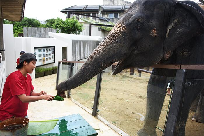 Okinawa Zoo and Museum