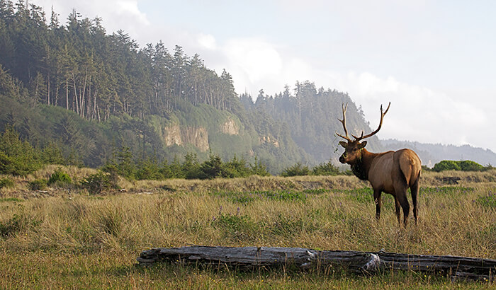 Redwood State park, California (wildlife scenic)
