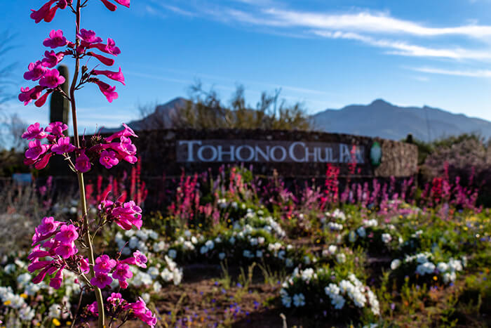 Tohono Chul Park