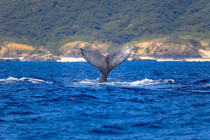 Whale watching, Okinawa