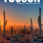 fun things to do in Tucson