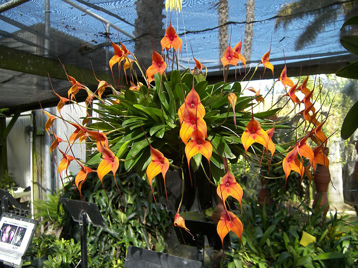 Santa Barbara Orchid Estate