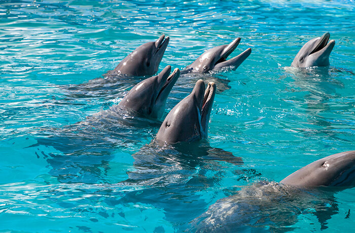 Wild About Dolphins