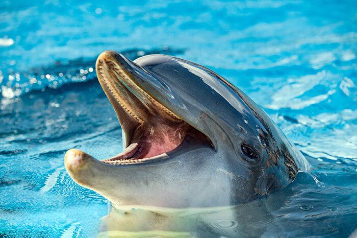 Delphinus Punta Cancun