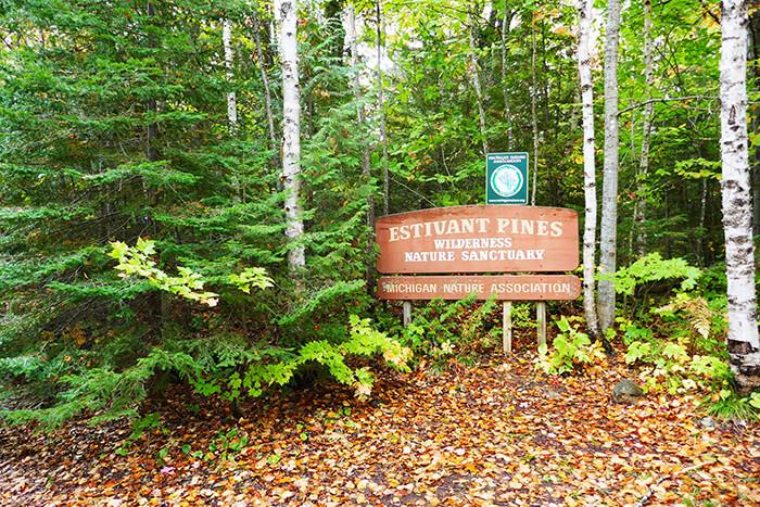 Estivant Pines Nature Sanctuary