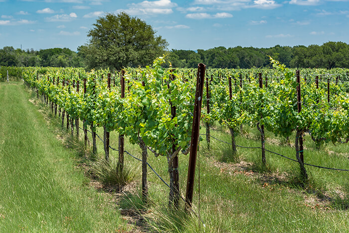Texas Wine Trail