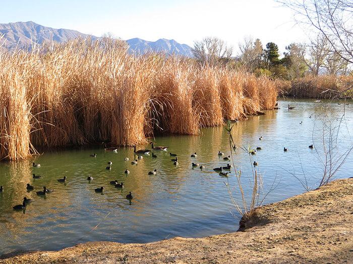 Floyd Lamb Park