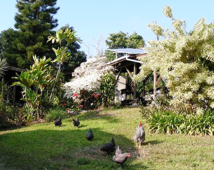 Kuaiwi Farm