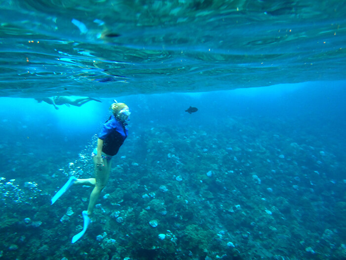 Molokini Express Snorkeling