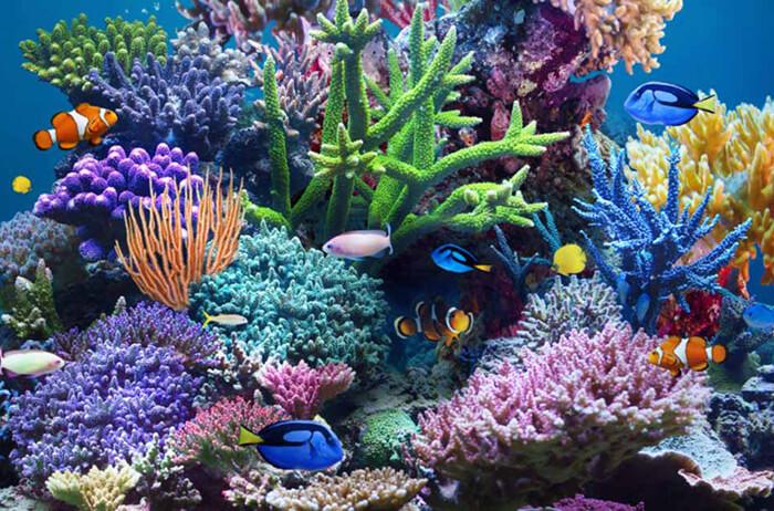 SEA LIFE Aquarium (Minnesota)