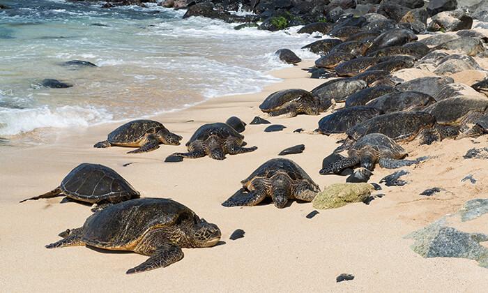 Sea Turtles at Ho'okipa Beach Park