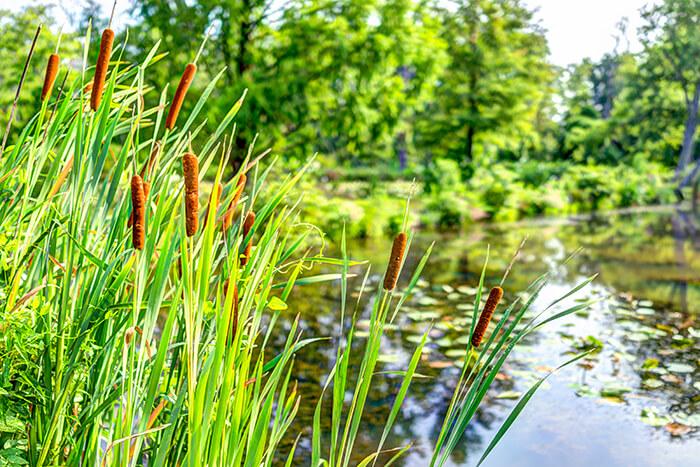 Kenilworth Park and Aquatic Gardens