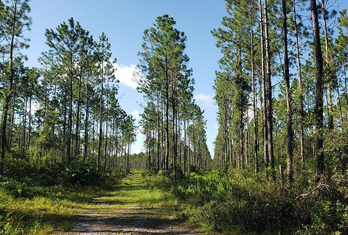 Twelve Mile Swamp Conservation Area
