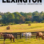fun things to do in Lexington