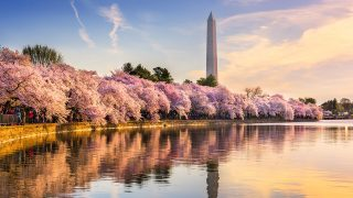 things to do in Washington, DC
