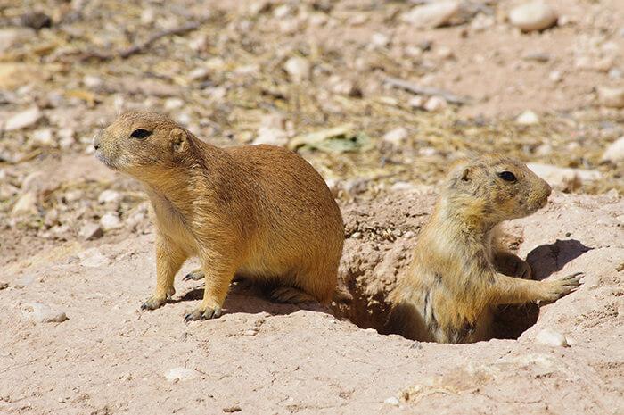 Living Desert State Park