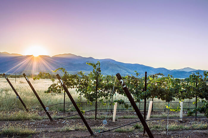 Scottsdale Wine Trail