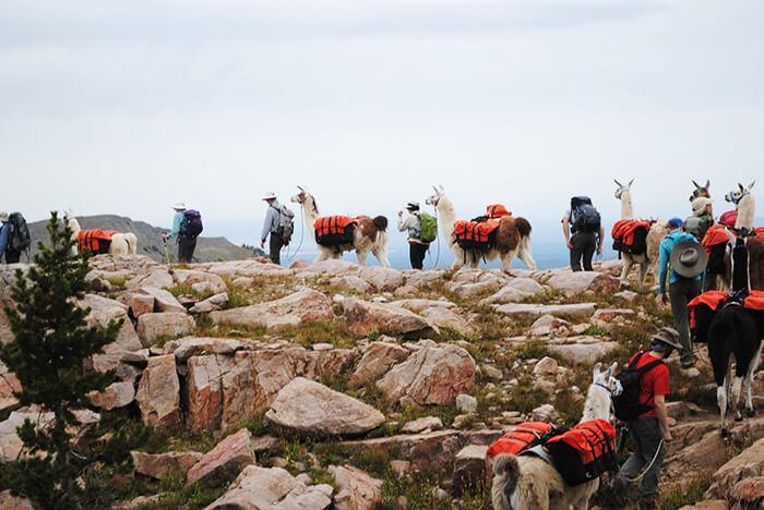 Wilderness Ridge Trail Llamas