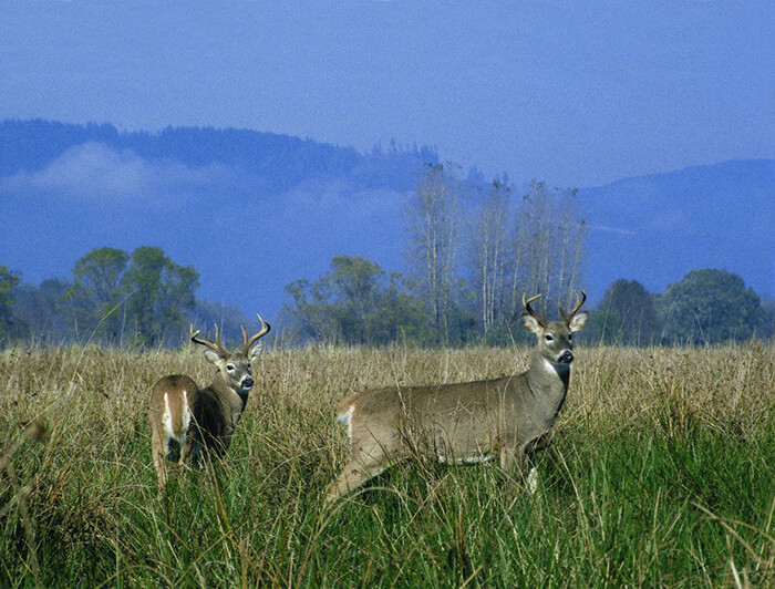 Lewis and Clark National Wildlife Refuge