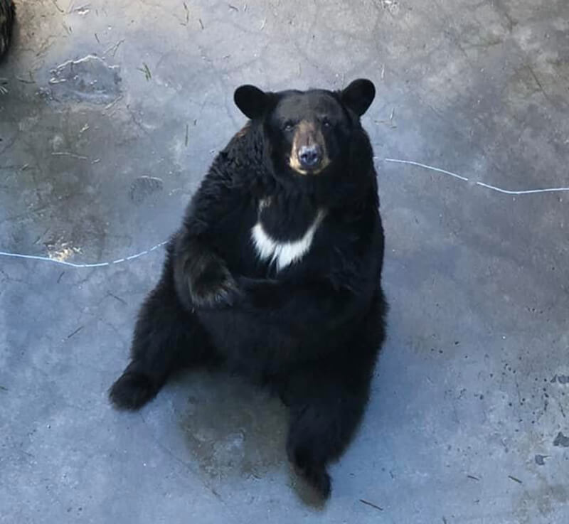 Cherokee Bear Zoo