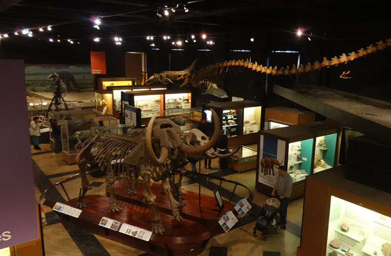 University of Michigan Museum of Natural History