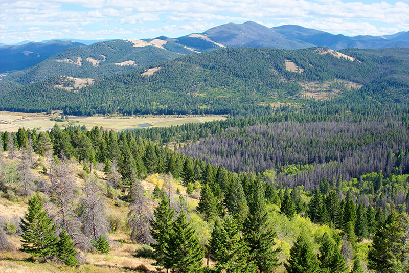 Beaverhead-Deerlodge National Forest