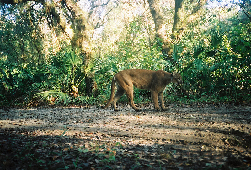 Florida Panther National Wildlife Refuge