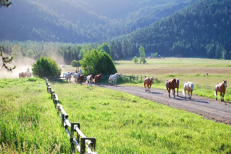 McGinnis Meadows Ranch