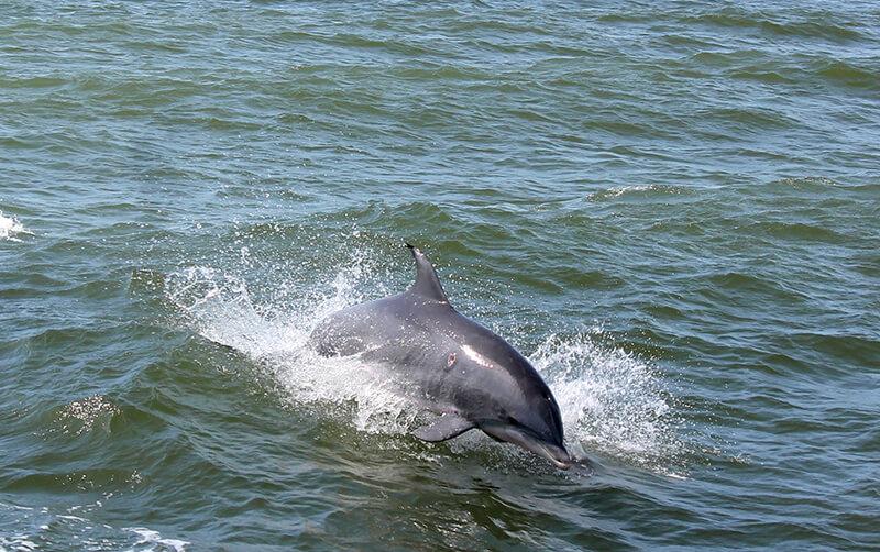 Rudee Flipper Dolphin Tours