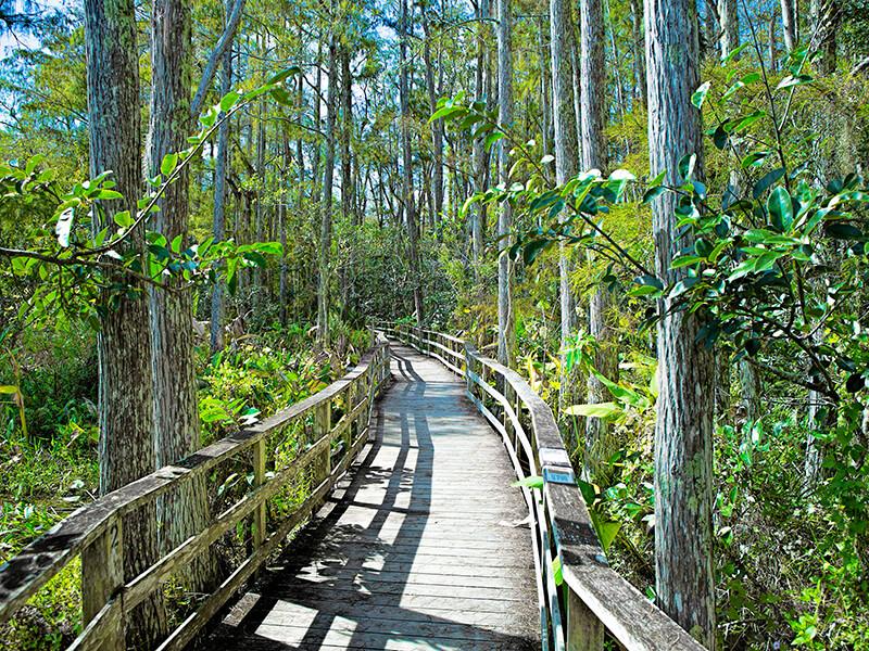 Audubon Corkscrew Swamp Sanctuary