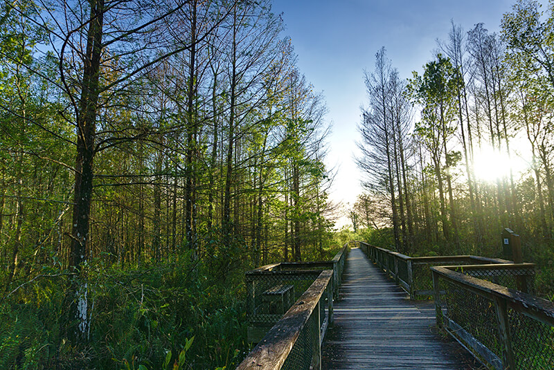 Bird Rookery Swamp Trail