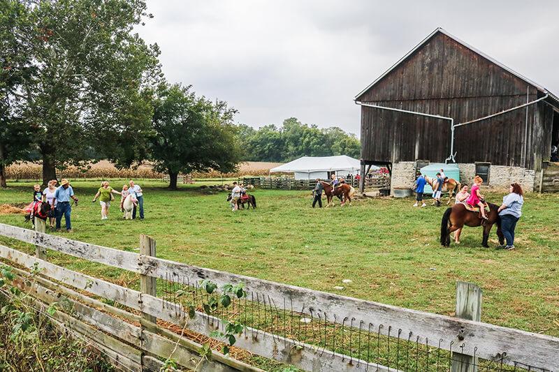 Learning Tree Farm