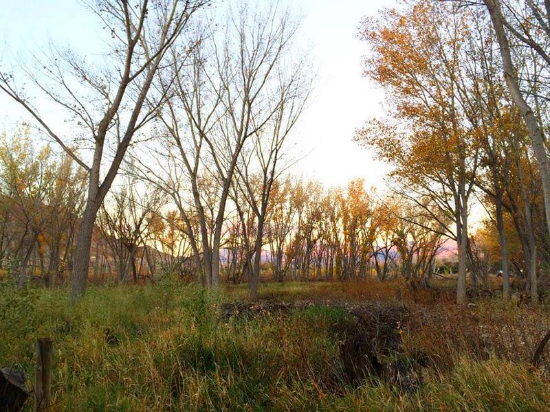 Scott M. Matheson Wetlands Preserve